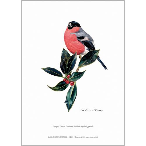 ART PRINT A4 - Bullfinch