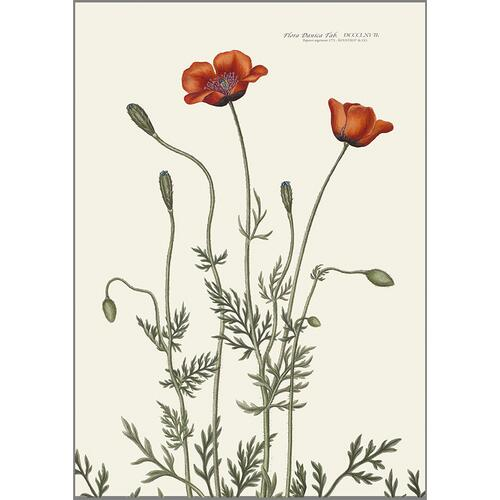 ART PRINT A3 - Prickly poppy - OUT OF STOCK