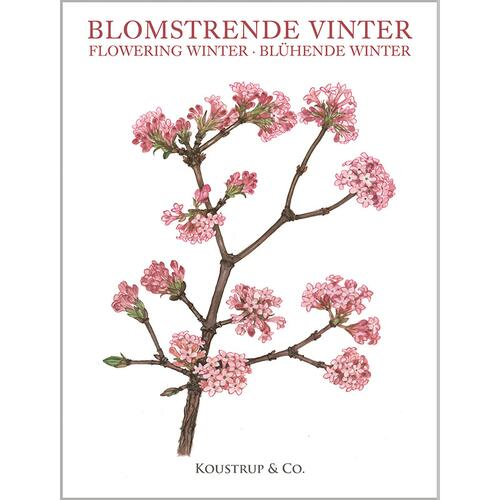 FLOWERING WINTER - 8 cards