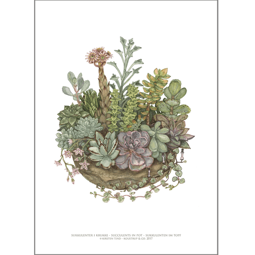 ART PRINT A3 - Succulents in pot
