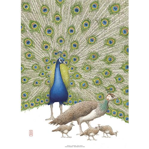ART PRINT A3 - Blue peafowl