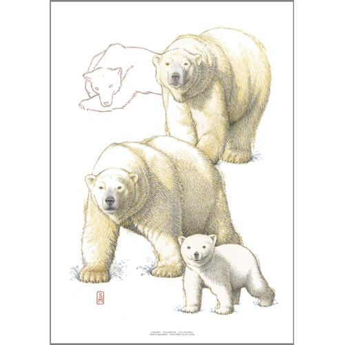 ART PRINT A3 - ZOO Polar bear