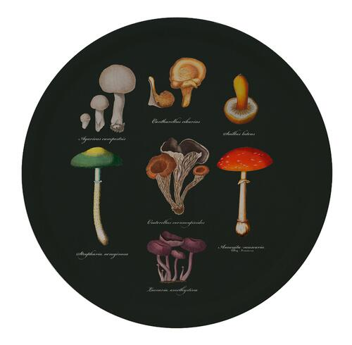 TRAY Ø38 - Mushrooms