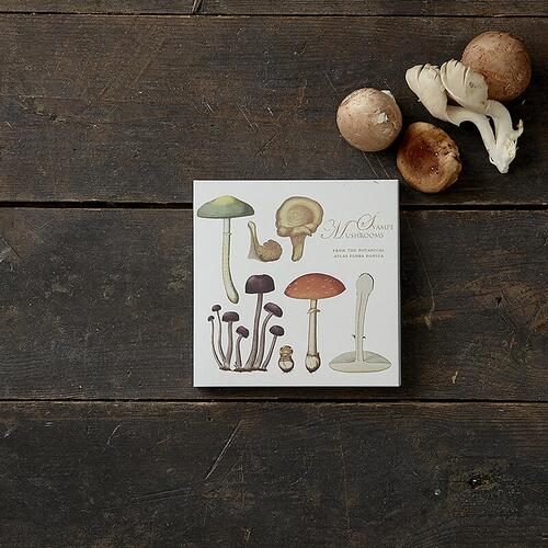 MUSHROOMS - Square card folder
