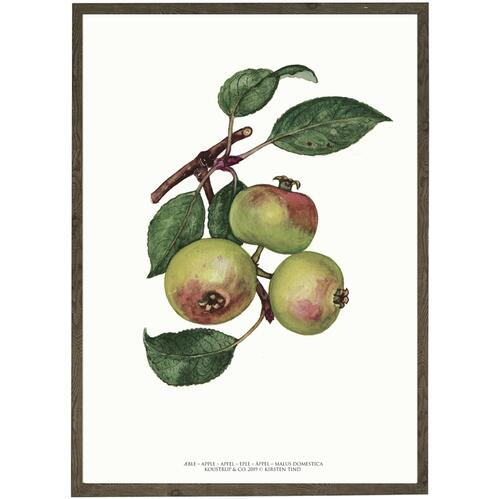 ART PRINT - Apple - CHOOSE SIZE
