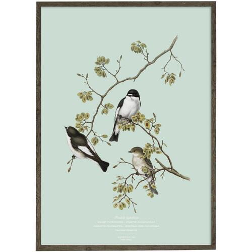 ART PRINT - Pied Flycatcher - CHOOSE SIZE
