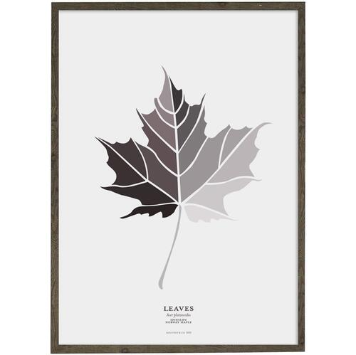ART PRINT - Leaf (grey) Norway maple - CHOOSE SIZE