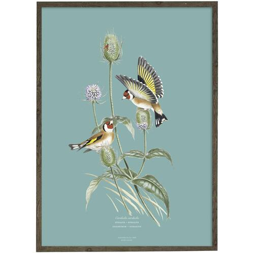 ART PRINT - Goldfinch - CHOOSE SIZE
