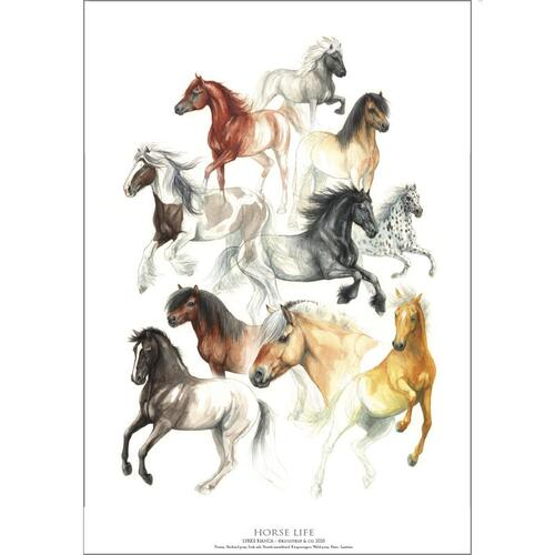 HORSE LIFE - Poster A2