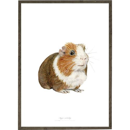 Guinea pig - ART PRINT - CHOOSE SIZE