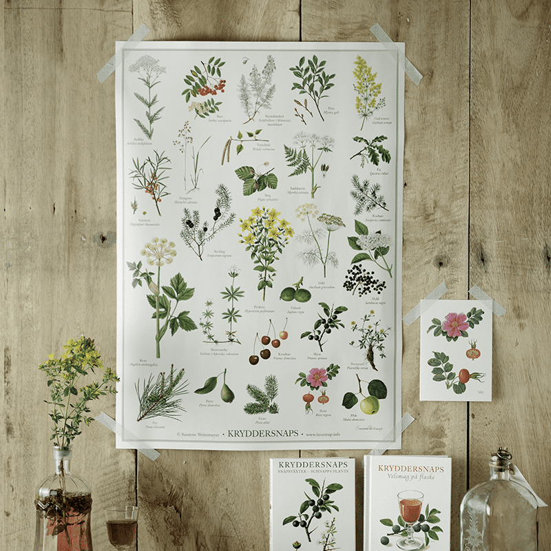 HERBS FOR SCHNAPPS (KRYDDERSNAPS) - POSTER A2