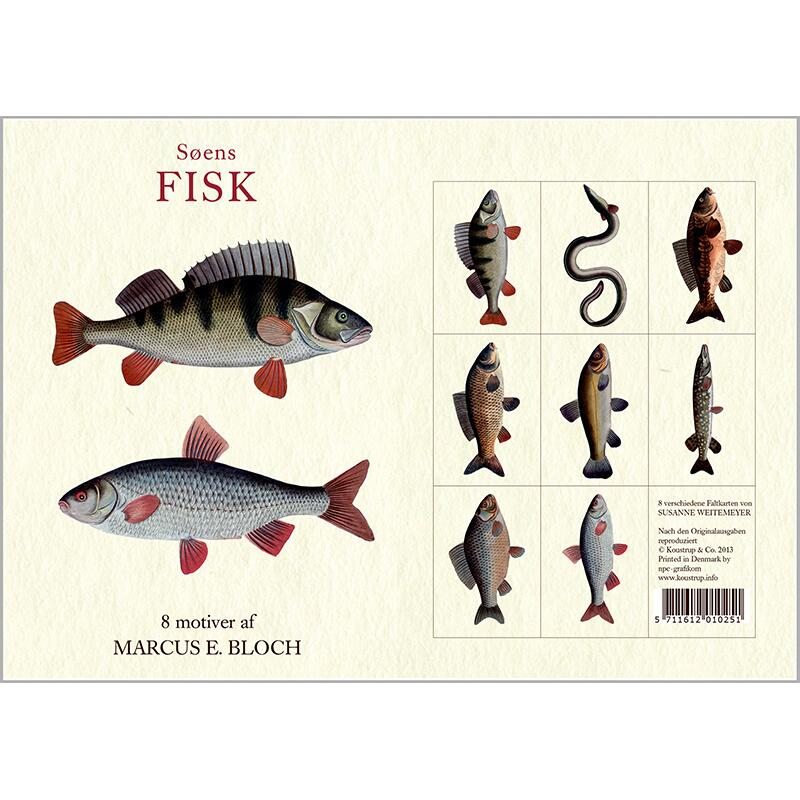 FRESHWATER FISH - 8 cards