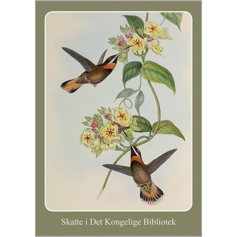 HUMMINGBIRDS - 8 cards - OUT OF STOCK