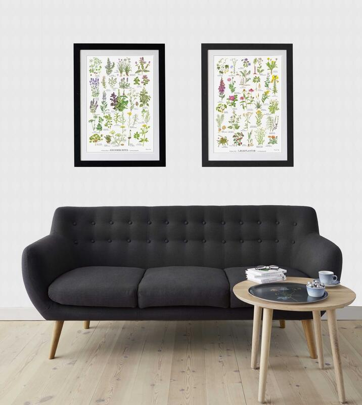MEDICINAL PLANTS (LÆGEPLANTER) - Poster A2 - CURRENTLY OUT OF STOCK