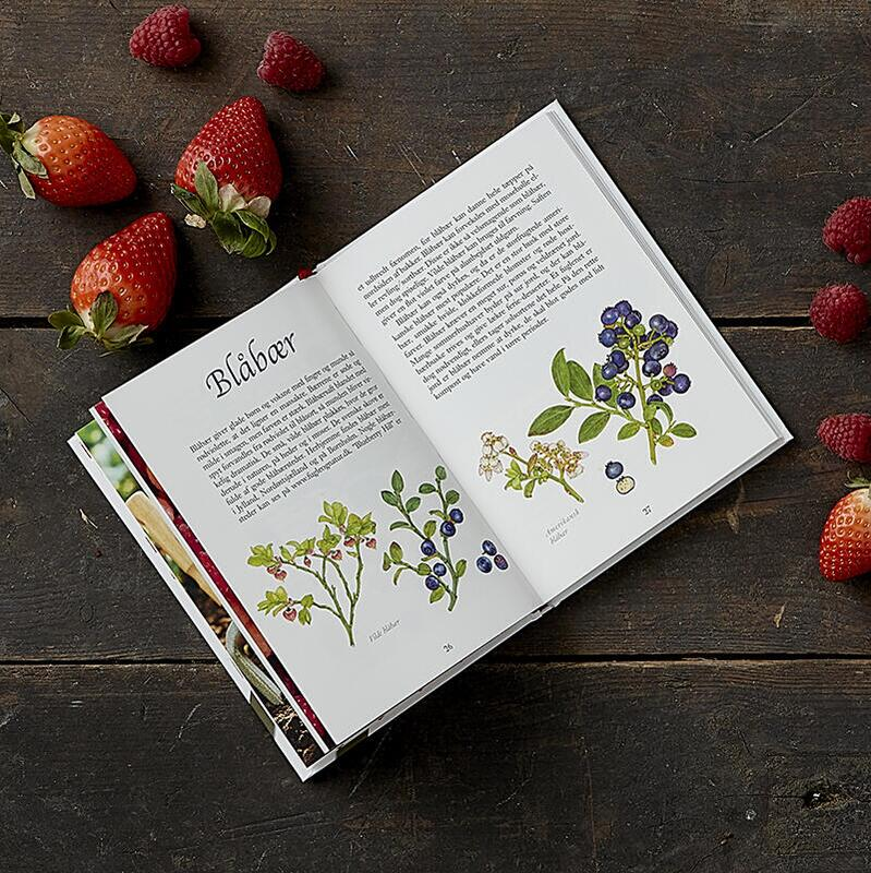 BUCH: BERRIES - Gesundes Superfood