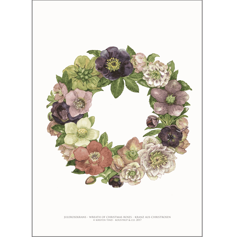 ART PRINT A3 - Wreath of Christmas roses
