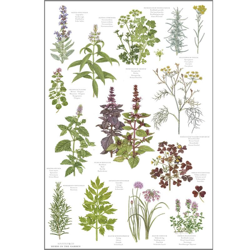 ORGANIC TEA TOWEL - Herbs