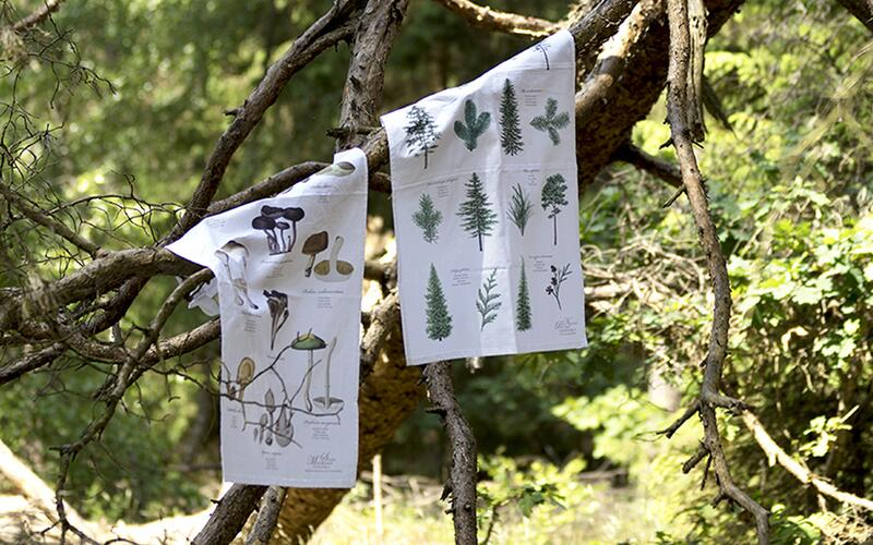 ORGANIC TEA TOWEL - Pine trees