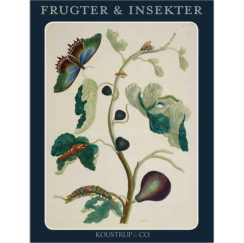 FRUITS AND INSECTS - 8 cards