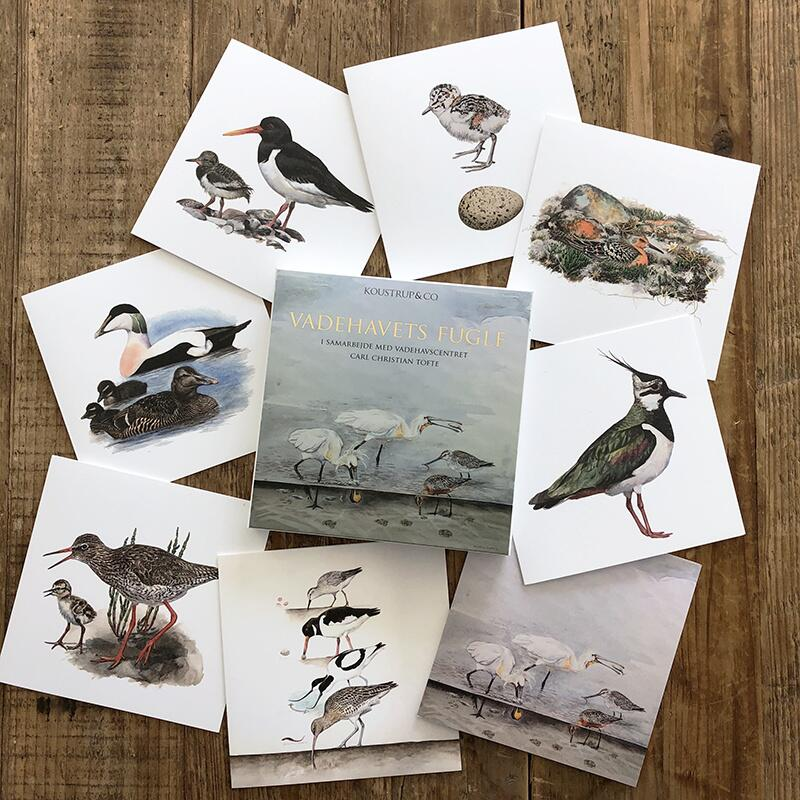 BIRDS FROM THE VADES - Square card folder