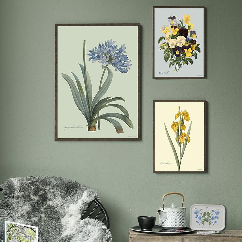 ART PRINT - Yellow iris