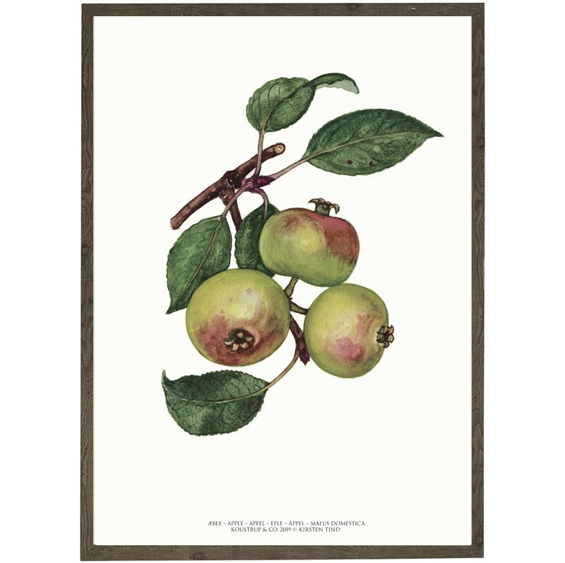 ART PRINT - Apple