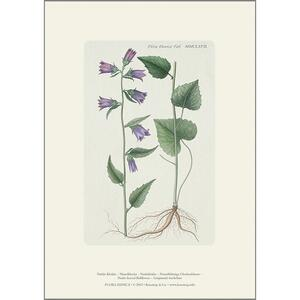 ART PRINT A4 - Nettle-leaved bellflower