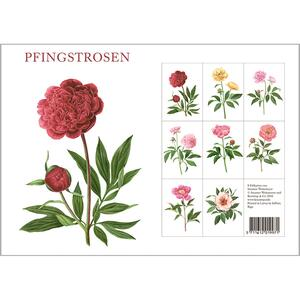 PFINGSTROSEN - 8 cards (german)