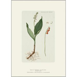 ART PRINT A4 - Lily of the valley