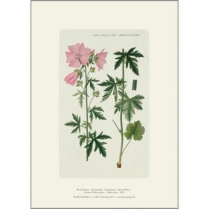 ART PRINT A4 - Greater musk-mallow