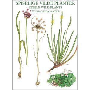 Edible Wild Plants - 8 cards