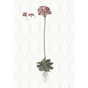 ART PRINT A3 - Bird's-eye primrose