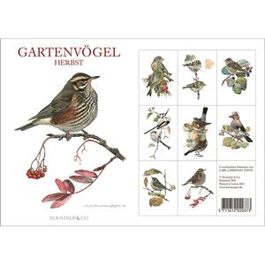 GARDEN BIRDS AUTUMN - 8 cards (german)