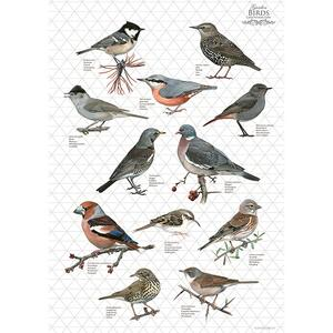 ORGANIC TEA TOWEL - Grey birds - OUT OF STOCK