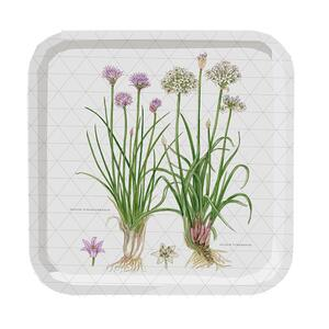 SQUARE TRAY 32x32 - Chives