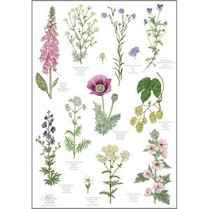 ORGANIC TEA TOWEL - Monastery Garden - CURRENTLY OUT OF STOCK