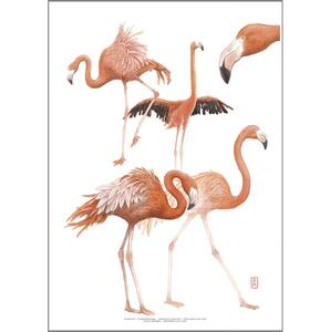 KUNSTDRUCK A3 - ZOO Flamingo