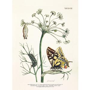 ART PRINT A4 - Fennel and butterfly