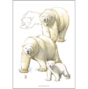 PRINT A4 - ZOO Polar Bear