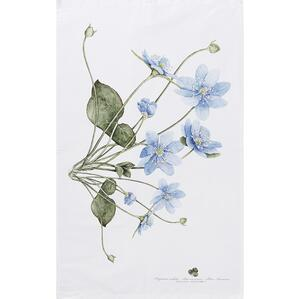 ORGANIC TEA TOWEL - Blue anemone