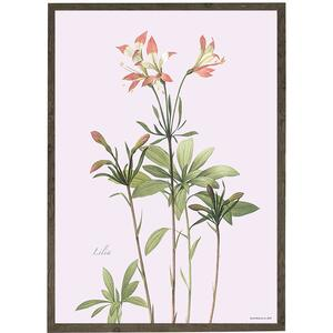 ART PRINT - Lily - CHOOSE SIZE