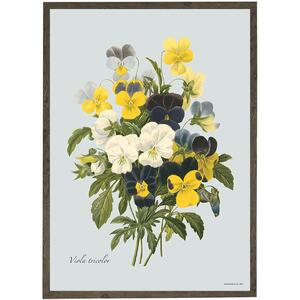 ART PRINT - Pansy - CHOOSE SIZE