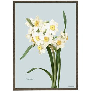 ART PRINT - Narcissus - CHOOSE SIZE