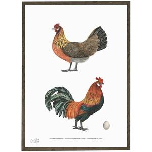 Old Danish landbreed - CHICKENS - ART PRINT - CHOOSE SIZE
