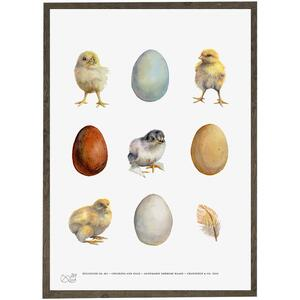 ART PRINT - Eggs, chickens and feather - CHOOSE SIZE