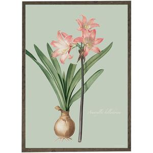 ART PRINT - Amaryllis Belladonna - CHOOSE SIZE