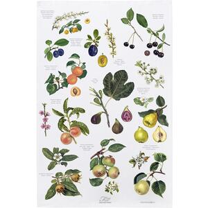 ORGANIC TEA TOWEL - Fruit