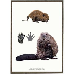 ART PRINT - Beaver - CHOOSE SIZE