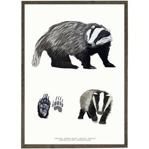 ART PRINT - Badger - CHOOSE SIZE