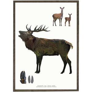 ART PRINT - Stag - CHOOSE SIZE